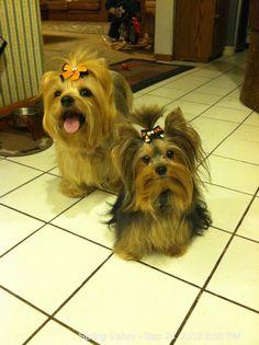 Roxi & Sassie