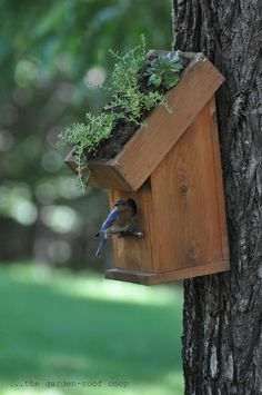 Living roof bluebird house. A wonderful look but I suspect the birds and squirrels would ruin it in no time.