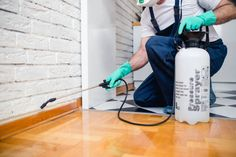 Dealing with pests in your Cache County home? Let us get that problem under control and keep it that way. Best Pest Control, Pest Control Services, Bug Control, Bed Bug Spray, Termite Pest Control, Mosquitos, Pest Management, Garden Guide, Bed Bugs