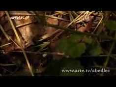 Le mystère de la disparition des abeilles : dernières révélations d'ARTE