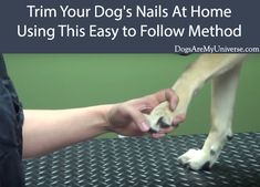 Trim Your Dog's Nails At Home. It is not hard to trim your dogs nails. You just need to exercise a little bit of care Trim Your Dog's Nails At Home. It is not hard to trim your dogs nails. You just need to exercise a little bit of care Puppy Training Schedule, Training Your Dog, Baby Dogs, Pet Dogs, Pets, Doggies, Dog Care Tips, Pet Care, Cute Little Puppies