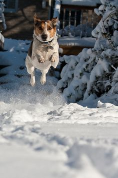 High Flying in the Snow by Michael Thompson on 500px