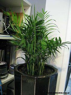 Plantas de interior que limpian el aire desustanciasquímicasperjudiciales: Las plantas no solo pueden ser una herramienta de decoración que siempre hace juego con todo, sino una posibilidad de mantener espacios interiores con el aire purificado. Sin embargo, no todas las plantas sirven para es
