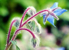 Categorie: Bloemen foto's Blauwe bloem  Prijs per kaart vanaf: € 2,65 excl. porto Wenskaart is geheel naar eigen wens aan te passen, tekst, figuur of foto. www.wenskaartenshop.droomcreaties.nl