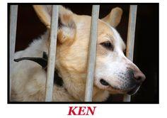 Większość ludzi NIGDY nie wejdzie do schroniska. Większość psów NIGDY z niego nie wyjdzie... wystawa psów ze Schroniska dla Zwierząt w Sokółce - Wolontariusze