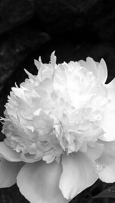 355 best flowers bw images on pinterest black and white black actually there are so many types of white flowers around the world beautiful flowers white flower names list small white pretty wedding plants perennial mightylinksfo