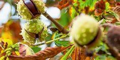 herbstliches wochenende bilder  #herbstlicheswochenendebilder #Wochenende Gb Bilder, Advent, Autumn