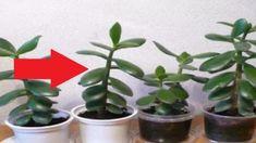 Feng Shui, Sweet Home, Garden, Plants, Declutter, Garten, House Beautiful, Lawn And Garden, Gardens