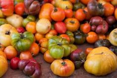 tomatoes - Google Search