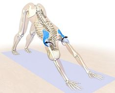Best Yoga posture to prevent shoulder issues and rehab them - the rotator cuff and deltoids in downward facing dog pose