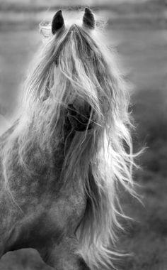 """Okay, maybe I do need a haircut"". --  Andalusian Horse"