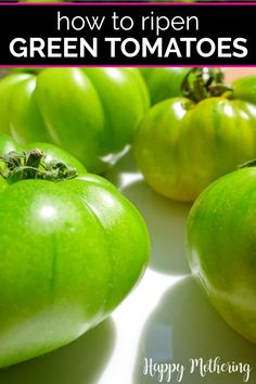 If you're growing tomatoes in your garden and you're getting an early frost, you may be wondering what to do? Learn how to ripen green tomatoes indoors the best way with this easy method. This old gardening trick will give you juicy red tomatoes to enjoy in your favorite recipes. #gardeningtips #greentomatoes #gardening #tomatoes #gardener #ripeningtomatoes #homesteading #tomatogrowingtips #gardeningideas #homesteader #homemaking #garden #howto #diy #lifehacks Growing Tomatoes, Growing Vegetables, Hydroponic Gardening, Organic Gardening, Gardening For Beginners, Gardening Tips, Raised Garden Beds, Raised Bed