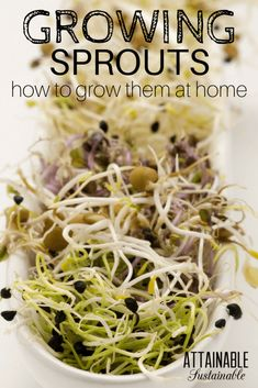 Whether sprouting lentils or growing mung beans for sprouts, it's easy to grow bean sprouts at home for fresh salads all year round. And it costs a lot less than buying them at the store.