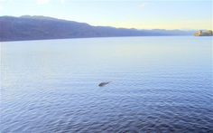 Could this be the best ever picture of the Loch Ness Monster?
