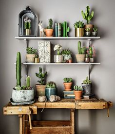 collection de cactus sur un meuble de métier en bois, ancien établi Mini Cactus, How To Plant Cactus, Cactus Flower, Cactus Plants, Nature Plants, Cactus Decor, Plant Decor, Plant Art, Plant Shelves Outdoor