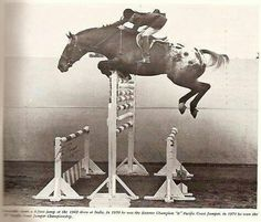 "Found this in our Blog feed on Tumblr. Just thought I'd share it with you! Amazing! A picture of Crocodile, a registered Appaloosa gelding, and his rider jumped 6' 9"" at Indio, California, back in 1969 #etsy #eecustomhorseshoes"