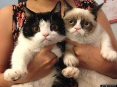 grumpy cat brother pokey