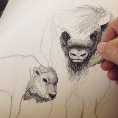 Bison 3. Illustration af Draw Doodles Study