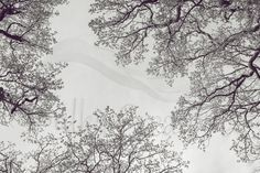 Printable Black and White Oak Tree Top Photography White Oak Tree, Tree Photography, Home Printers, International Paper Sizes, Tree Tops, Poster Size Prints, Printing Services, Art Print, Printables