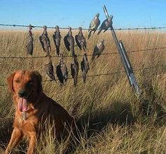 Does everyone have a date for tomorrow! Dove Hunting Season Begins :)