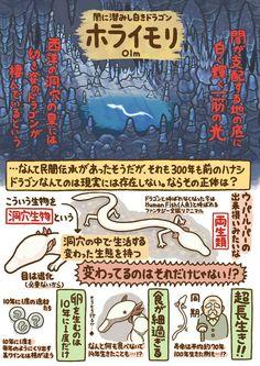 Japanese Animals, Japanese Words, Weird Creatures, Sea Creatures, Animal Paintings, Animal Drawings, Botanical Illustration, Illustration Art, Animals And Pets