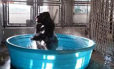 VIDEO: Takto gorily tančí breakdance. Z bazénu si udělají fontánu