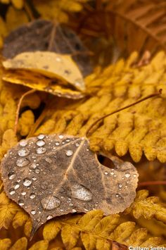 The perfect autumnal shades of faded suede and rich saffron. #autumn #fall #leaves #dewdrops #nature
