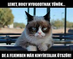 "Képtalálat a következőre: ""grumpy cat magyarul felirattal"" Funny Shit, Funny Cats, Funny Animals, Cute Animals, Funny Stuff, It's Funny, Cat Stuff, Funny Sayings, Random Stuff"