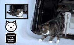 Maru desperately scratching...  http://www.catvideooftheweek.com/videos/view/3528  #cvotw