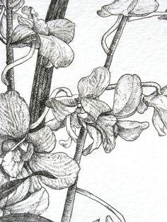 coloriage fleurs et plantes !   pergamano   pinterest   coloriage