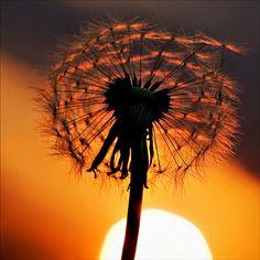 By Imapix... fantastic silhouette using macro