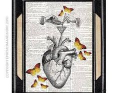 human heart illustration - Buscar con Google