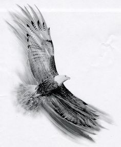 http://fc09.deviantart.net/fs4/i/2004/267/1/e/Soaring_Eagle_by_Basixofblack.jpg adresinden görsel.