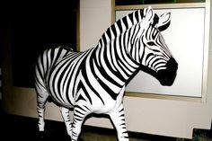 Endurocad Zebra - Thanks to Investec December 2013, June, Skill Training, Animal Print Rug, Schools, Clinic, School, Colleges