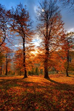 :: Golden Time in a Golden Place ::. Photo by: Amir Abdolpanah on Fall Pictures, Fall Photos, Landscape Photography, Nature Photography, Golden Time, Autumn Scenes, All Nature, Autumn Inspiration, Beautiful Places