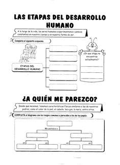 11 las etapas del desarrollo humano La Reproduction, Teachers Aide, School Items, Spanish Language Learning, Home Schooling, Science For Kids, Interactive Notebooks, Second Grade, Human Body