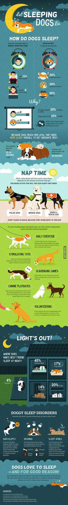 How Much Sleep Do Dogs Need?