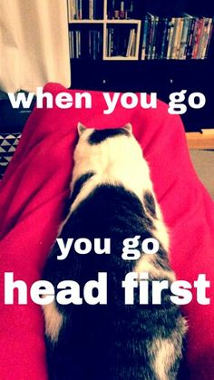 Cat chilling head first