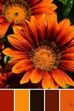 Kitchen colors schemes warm 61 ideas for 2019 Color Schemes Colour Palettes, Colour Pallette, Color Palate, Color Combos, Autumn Color Palette, Orange Color Palettes, Color Blending, Color Mixing, Decoration Palette