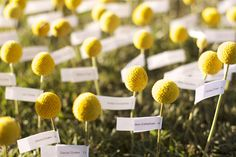 Grass with billy ball escort cards