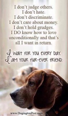 quotes about life with a dog - Google Search