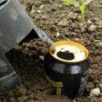 How to make a slug trap and bait at sowandso.com