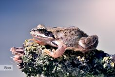 frog or toad will jump anyway by Marcello Machelli on 500px