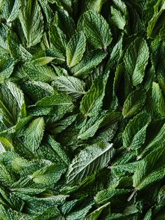 Mint Leaves by Alice Gao Photography
