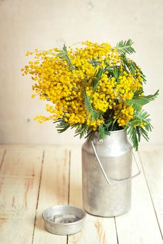 Flowers in vintage bottle. Mimosa flowers for Women's day. Table decoration.