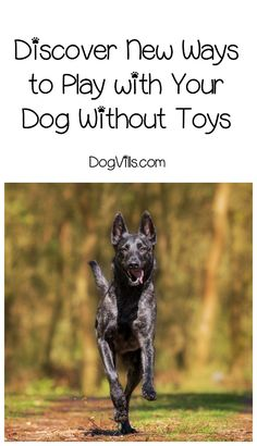 You don't have to go broke to entertain your pup! Check out these ways to play with your dog without toys!