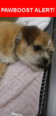 Is this your lost pet? Found in Los Angeles, CA 90038. Please spread the word so we can find the owner!  Male, neutered griffin mix, about 20 lbs. Hit by a car on Western and Lemon Grove on July 4th. He's in stable condition but hurt his mouth and possibly front legs. We brought him to the vet for now, please contact me asap. Thanks!   Near N Western Ave & Lemon Grove Ave