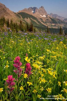 Flower meadows in Granite Park below the Garden Wall, Glacier National Park, Montana. By Don Geyer. (Don is an amazing photographer! Glad to see an old friend has some pics on here, and that I can say I own one of his beautiful waterfall prints! Beautiful World, Beautiful Places, Beautiful Sites, Places To Travel, Places To See, Places Around The World, Around The Worlds, Prado, Reserva Natural