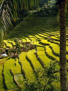 Banaue Rice Terraces are 2000 year old terraces that were carved into the mountains.