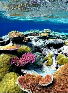 What a beautiful coral reef! - Someone - - Quel beau récif de corails ! What a beautiful coral reef! Underwater Creatures, Underwater Life, Ocean Creatures, Life Under The Sea, Beneath The Sea, Sea And Ocean, Fish Ocean, Great Barrier Reef, Sea World